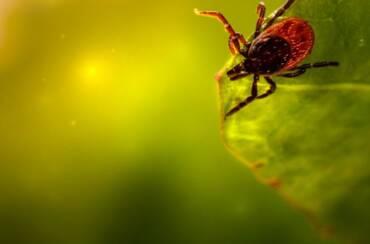 Lyme & Autoimmunity